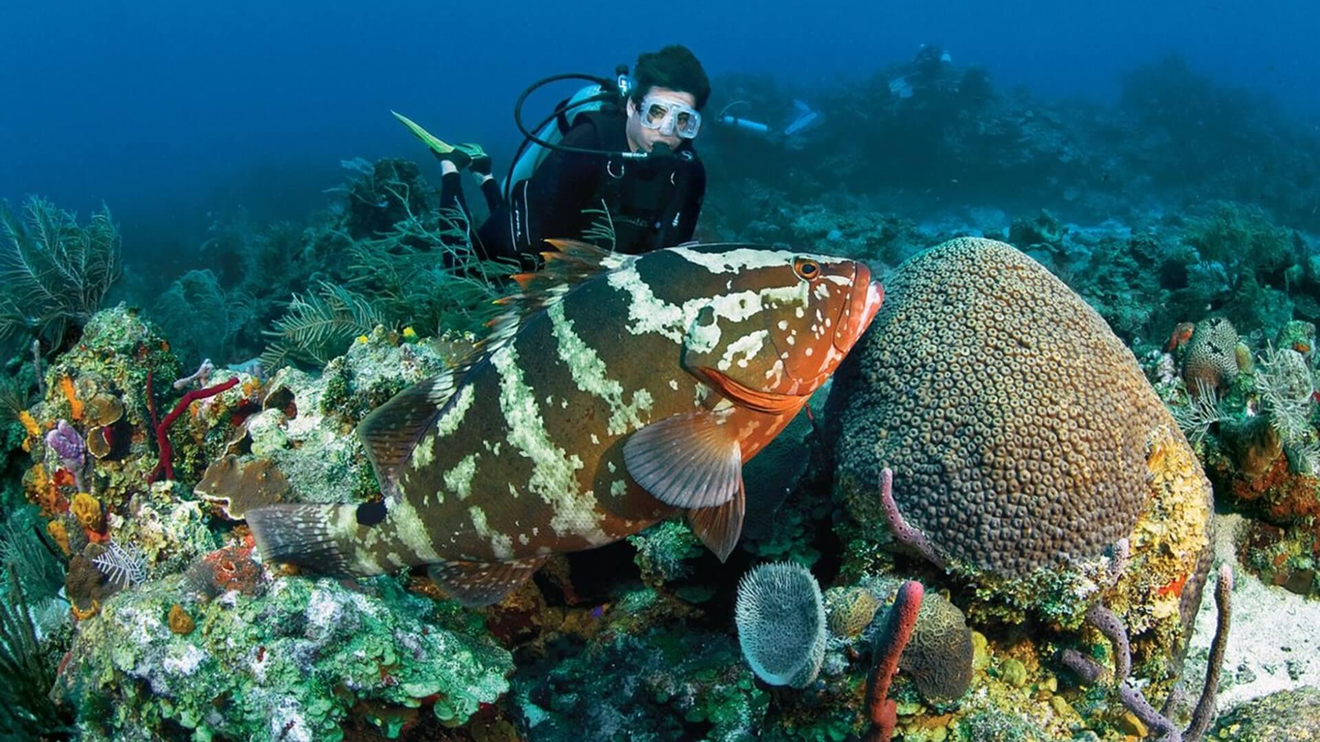 Blue Bay Marine Park Mauritius