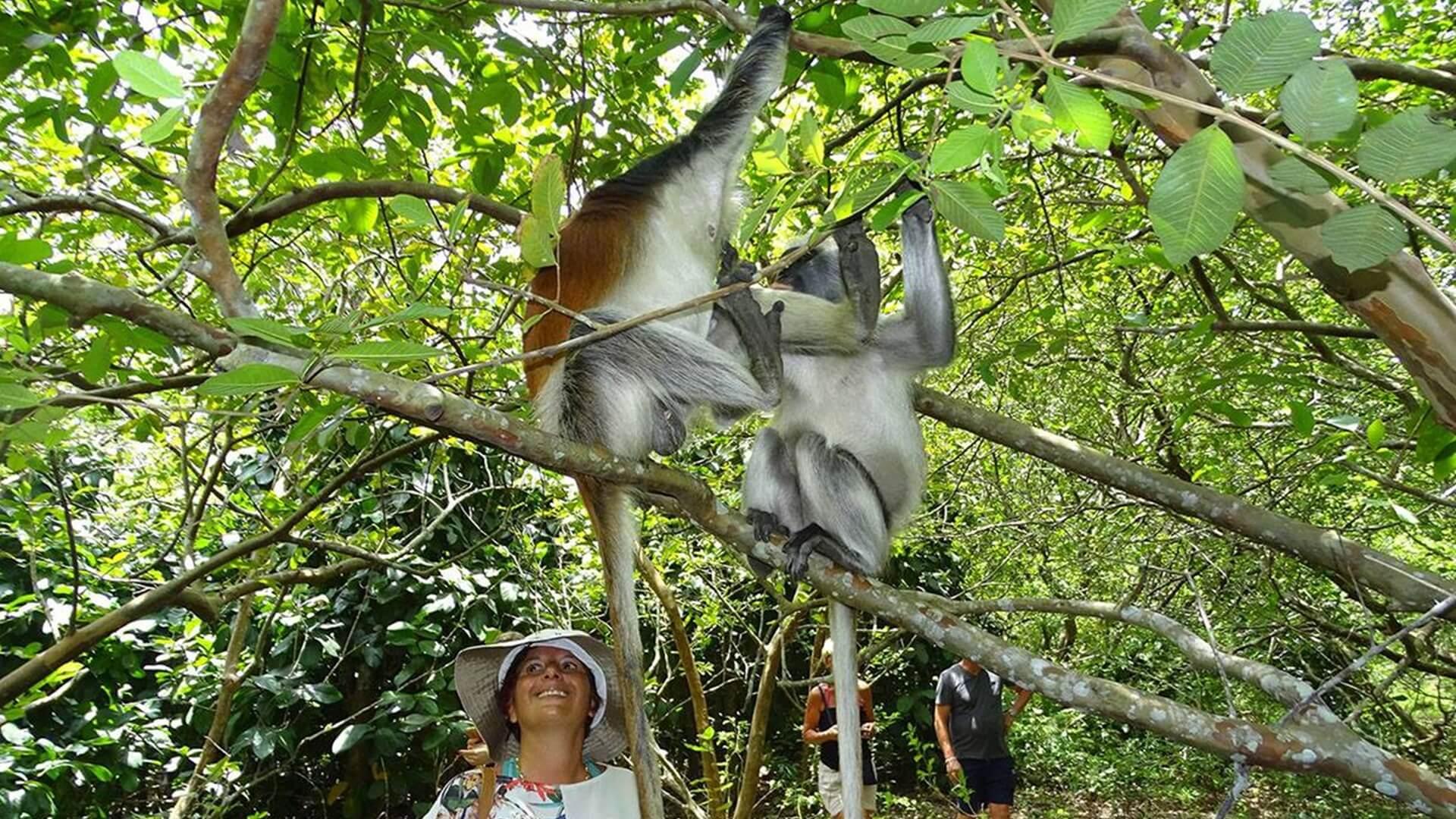 Jozani Ormanı Zanzibar