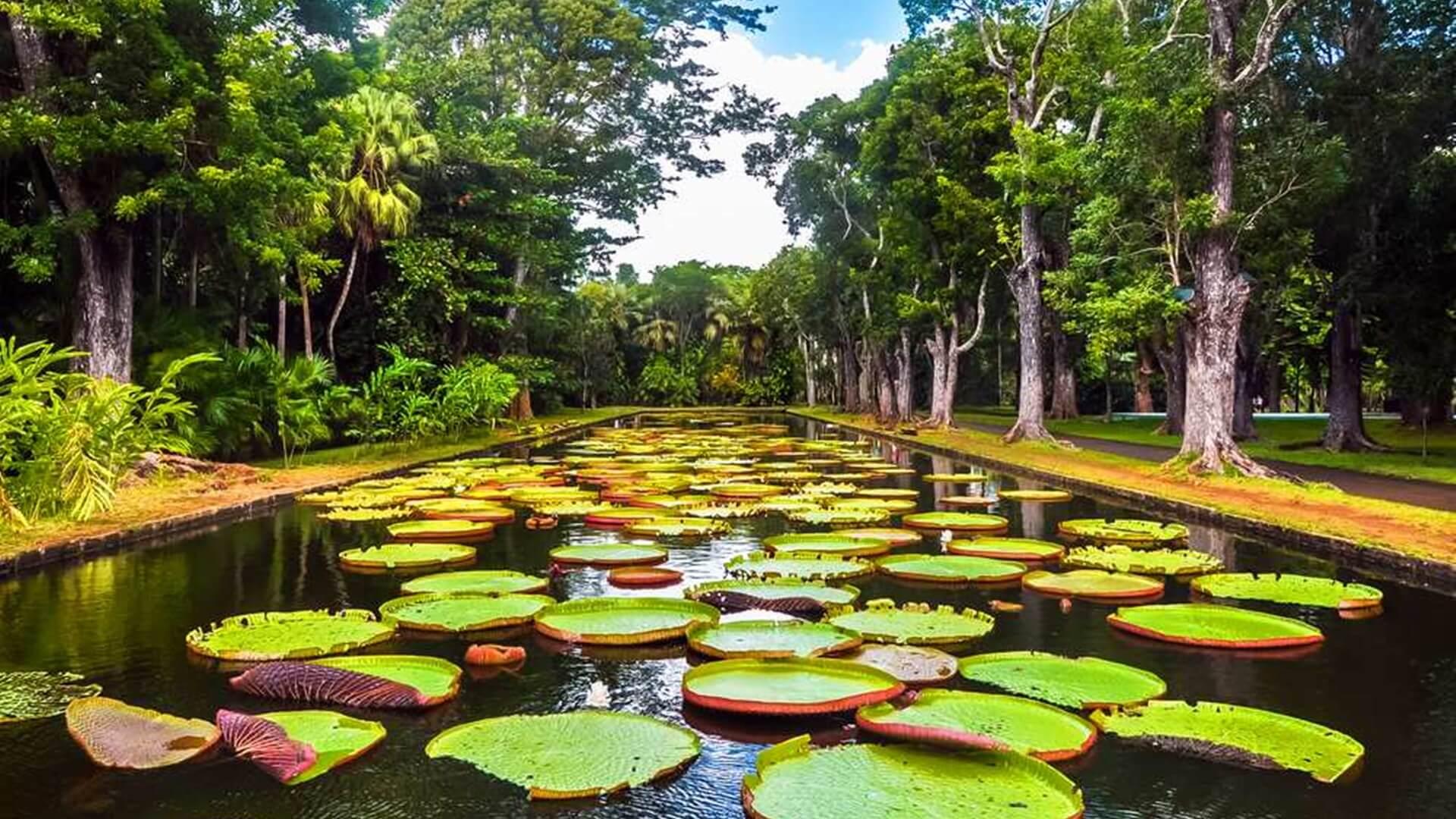 Sir Seewoosagur Ramgoolam Botanik Bahceleri Mauritius